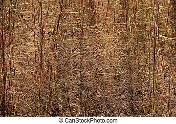 fond, de, grand, brun, herbe