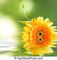 fond, de, naturel, spa, à, plante, et, reflet, dans eau