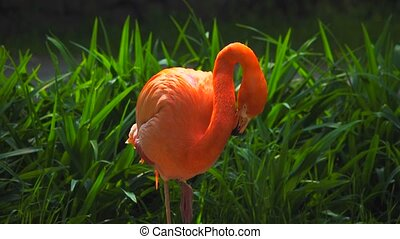 fond, flamants rose, rouge vert