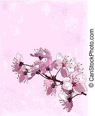 fond, fleur, cerise