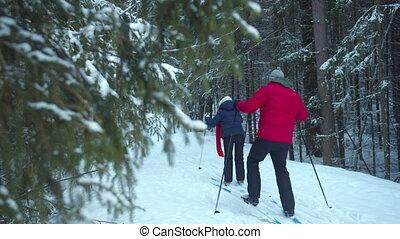 fond, forest., pin, ski, touristes
