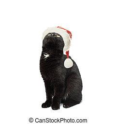 fond, haut, chat, regarder, noir, santa, chapeau blanc