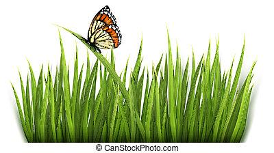 fond, herbe, butterfly., vector., vert, nature
