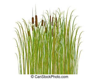 fond, herbe, isolé, blanc, jonc