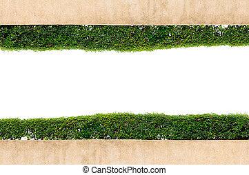 fond, herbe, isolé, vert, cadre, blanc
