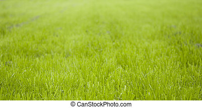 fond, herbe, vert