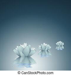 fond, lotus, pureté, -