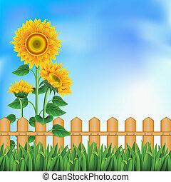 fond, mesh., sunflowers.