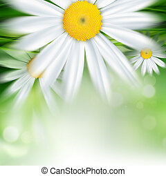 fond, nature