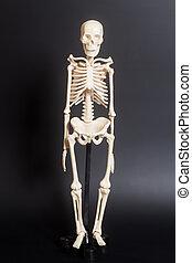 fond, noir, squelette, humain