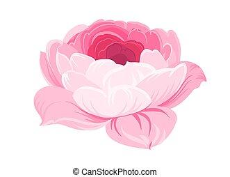 fond, pourpre, rose, blanc