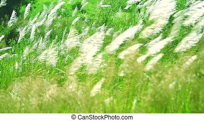 fond, premier plan, foyer, herbe, changement, defocus, ...