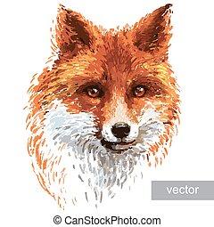 fond, renard blanc, coloré, illustration