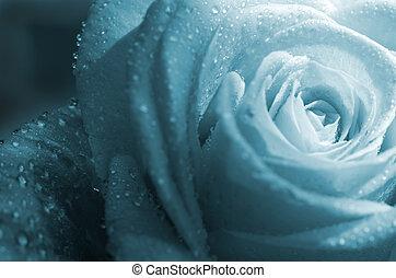 fond, rose