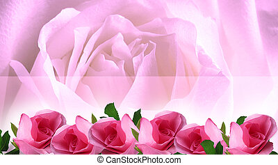 fond, roses, beau