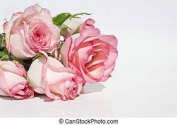 fond, roses, bouquet, rose, blanc