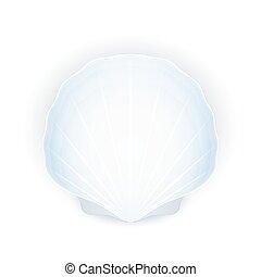 fond, seashell, blanc, isolé