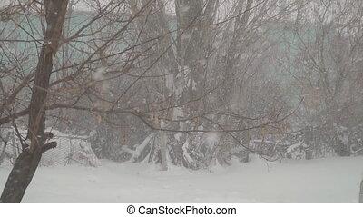 fond, tomber, lentement, neige, arbres