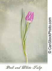 fond, tulipe, rose, blanc, vert, textured
