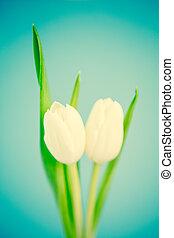 fond, tulipes, bleu, deux, blanc
