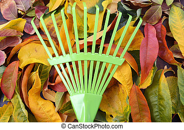 fond, vert, automne, rake., automne