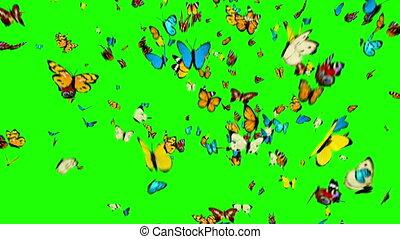 fond, voler, vert, papillons