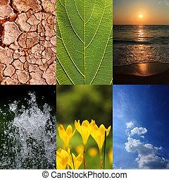 fondamentale, elementi, di, natura, e, ecologia