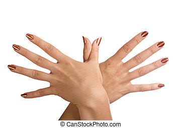 fondo., bianco, isolato, mani