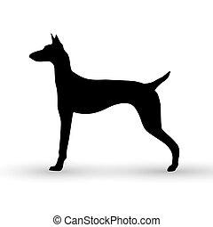fondo., bianco, vettore, silhouette, cane