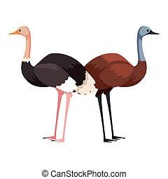 fondo blanco, avestruz, emu