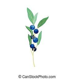 fondo blanco, ramita, arándano, vector, hojas, aislado, verde, ilustración