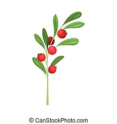 fondo blanco, ramita, vector, arándano, hojas, aislado, verde, ilustración