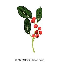 fondo blanco, ramita, vector, grosella, hojas, aislado, rojo verde, ilustración