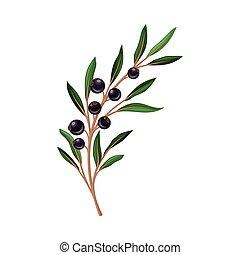 fondo blanco, ramita, vector, hojas, aislado, verde, grosella negra, ilustración
