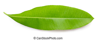fondo blanco, verde, aislado, hojas