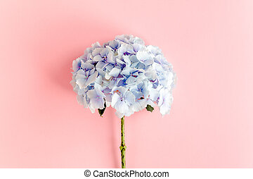 fondo., cima, disposizione, blu, rosa, ortensia, fiore, vista, appartamento
