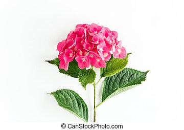 fondo., cima, disposizione, rosa, ortensia, fiore bianco, vista, appartamento