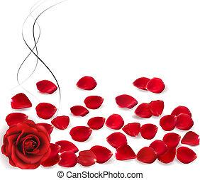fondo, con, rosa, petals., vector.