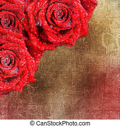 fondo, con, rose