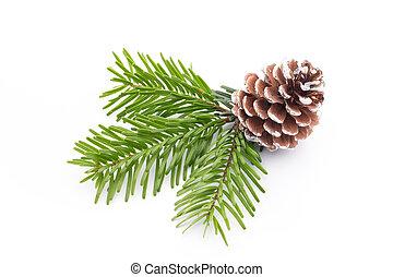 fondo., conos, árbol, aislado, blanco, rama, abeto