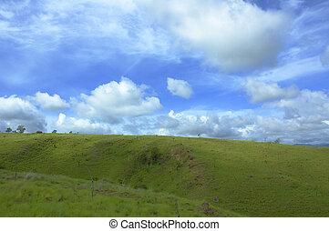 fondo, di, cielo blu, e, erba verde