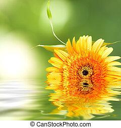 fondo, di, naturale, terme, con, pianta, e, riflessione,...