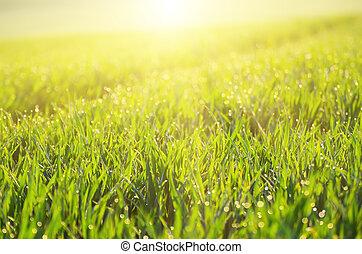 fondo, erba, campo verde