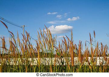 fondo, fiori, cielo, erba