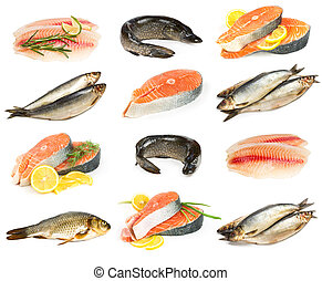 fondo., fish, set, isolato, bianco