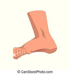 fondo, illustrazione, standing, vettore, piede umano, bianco, vista laterale