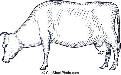 fondo., ilustración, blanco, vector, vaca, aislado, vendimia...