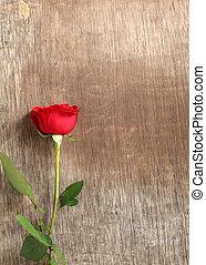 fondo, legno, rosso, sola rosa
