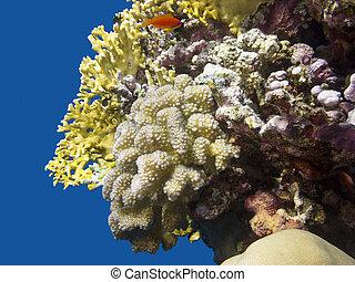 fondo, mar, arrecife, paisaje., colorido, coral, submarino, ...