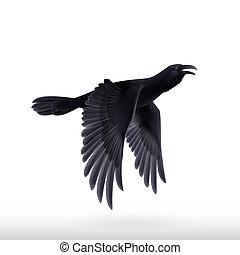 fondo negro, cuervo, blanco
